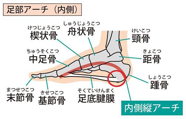 足底腱膜とは